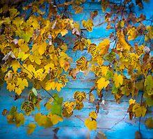 Autumn Tango by Mihai Ilie