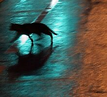 Cat in the Night by Cora Wandel