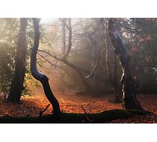 Autumn in Epping Forest Photographic Print