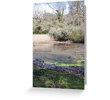 Reed beds  Greeting Card