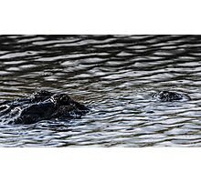 Gator country Photographic Print