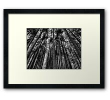 Stover Trees in Black and White Framed Print