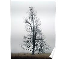 Lonely Tree in Fog Poster