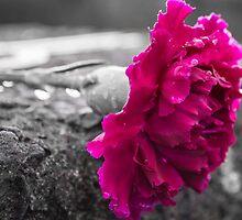 Pink by Stevie B