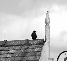 Bird on Windermere Pier  by KateMarieT
