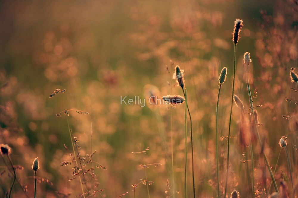 Spring Rush by Kelly Chiara
