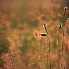 Spring Rush by Kelly Chiara