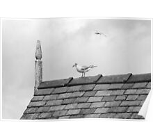 Seagull on Windermere Pier Poster