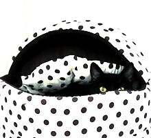 Dotty Dylan by Ladymoose