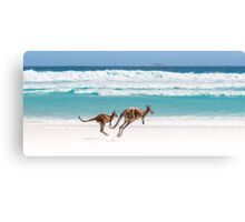 Kangaroos of Lucky Bay Canvas Print