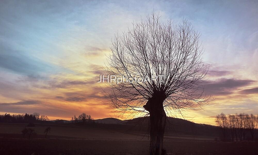 Willow Tree  by JHRphotoART