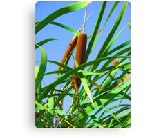 """""""Cattails"""" by Carter L. Shepard Canvas Print"""