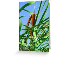 """Cattails"" by Carter L. Shepard Greeting Card"