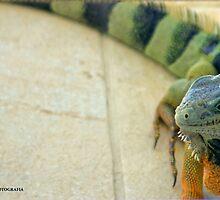 IGUANA! by Turtle6
