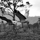 Flight Of The Brolga by Barbara  Jean