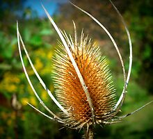 Brown Thistle by artbybutterfly