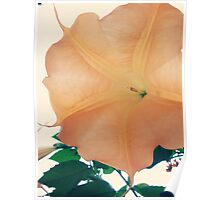 Cantaloupe Trumpet Flower Poster