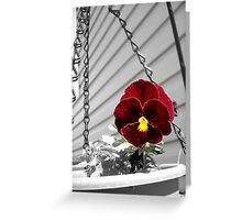 Color Pop Pansy Greeting Card