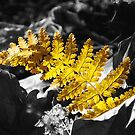 Fern Frond In Autumn's Light by Sharon Woerner