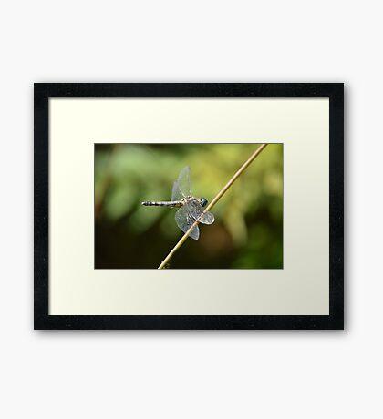 Fly, Dragon Framed Print
