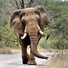 MAJESTIC BEAUTY - THE AFRICAN ELEPHANT – Loxodonta africana - AFRIKA OLIFANT by Magaret Meintjes