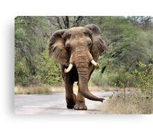 MAJESTIC BEAUTY - THE AFRICAN ELEPHANT – Loxodonta africana - AFRIKA OLIFANT Canvas Print