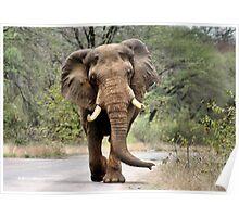 MAJESTIC BEAUTY - THE AFRICAN ELEPHANT – Loxodonta africana - AFRIKA OLIFANT Poster
