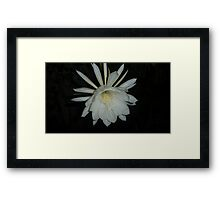 Queen of the Night 2014 Framed Print
