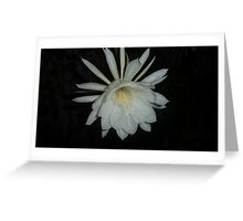 Queen of the Night 2014 Greeting Card
