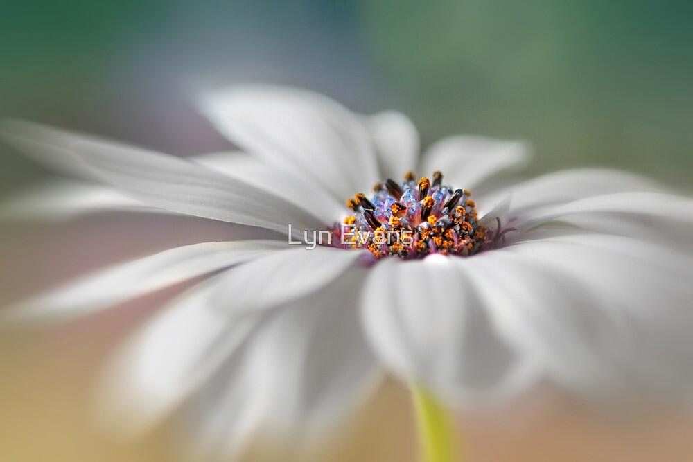 Daisy dreams by Lyn Evans