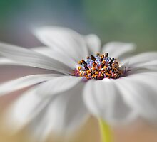 Daisy dreams by Lyn Evans