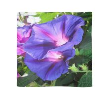 A Pair of Vibrant Morning Glories In Full Bloom Scarf