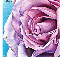 Lilac Rose Photographic Print