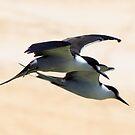 Formation Flying by john  Lenagan