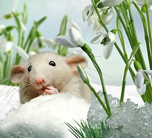 Hello - Is it Springtime Yet ? by Morag Bates