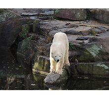 Polar Bear Rock (Berlin)  Photographic Print