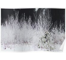 Winter White in the Woods of Maine Poster