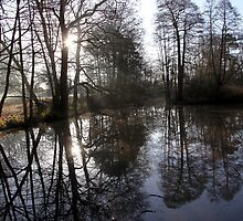 A cold and frosty morning. by John Dalkin