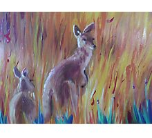 Kangaroos in Long Grass Photographic Print