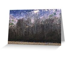 By the Thousands - Sandhill Cranes (Please view Large) Greeting Card