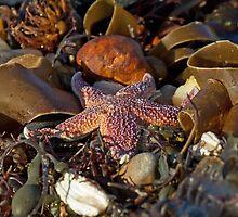 Starfish on Beach by Sue Robinson