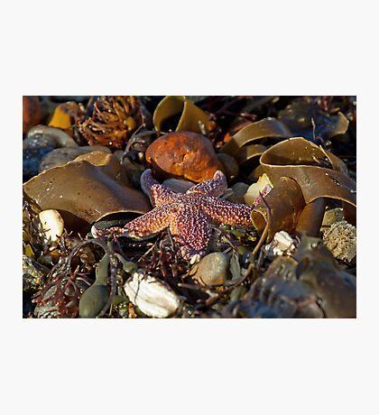 Starfish on Beach Photographic Print