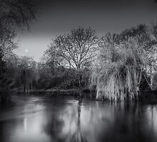 Moonlit Willow by Tobias King