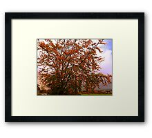 Tha Lampost and the Tree Framed Print