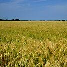 Wheat On The Prairie by WildestArt