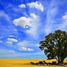 Australian Farm by Bas Van Uyen