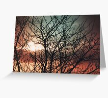 Trees and sky  Greeting Card