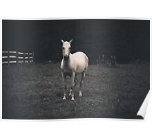 Lone White Horse Poster