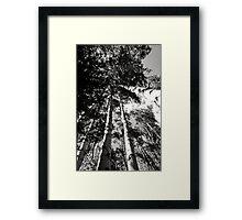 """""""Aspen Grove"""" Framed Print"""