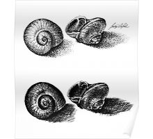 Inked Snail Shells Poster